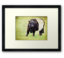 Did you bring a brush Framed Print