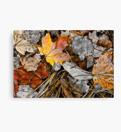 Fading Glory- Canvas Print