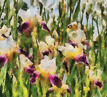 Iris - Mélodie d'iris by Mike  Savad