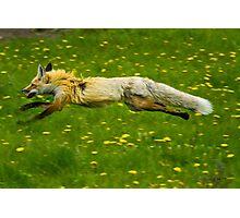 Lightning Frightened Fox Photographic Print