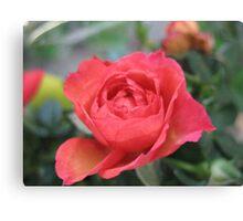 Ruby Slipper Rose Canvas Print