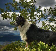 Odin on Mount Sleeping Beauty by Michael Schaefer