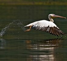 Ready for landing (II) by Konstantinos Arvanitopoulos
