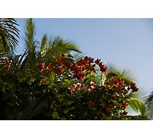 Palm Trees and Tropical Flowers Photographic Print