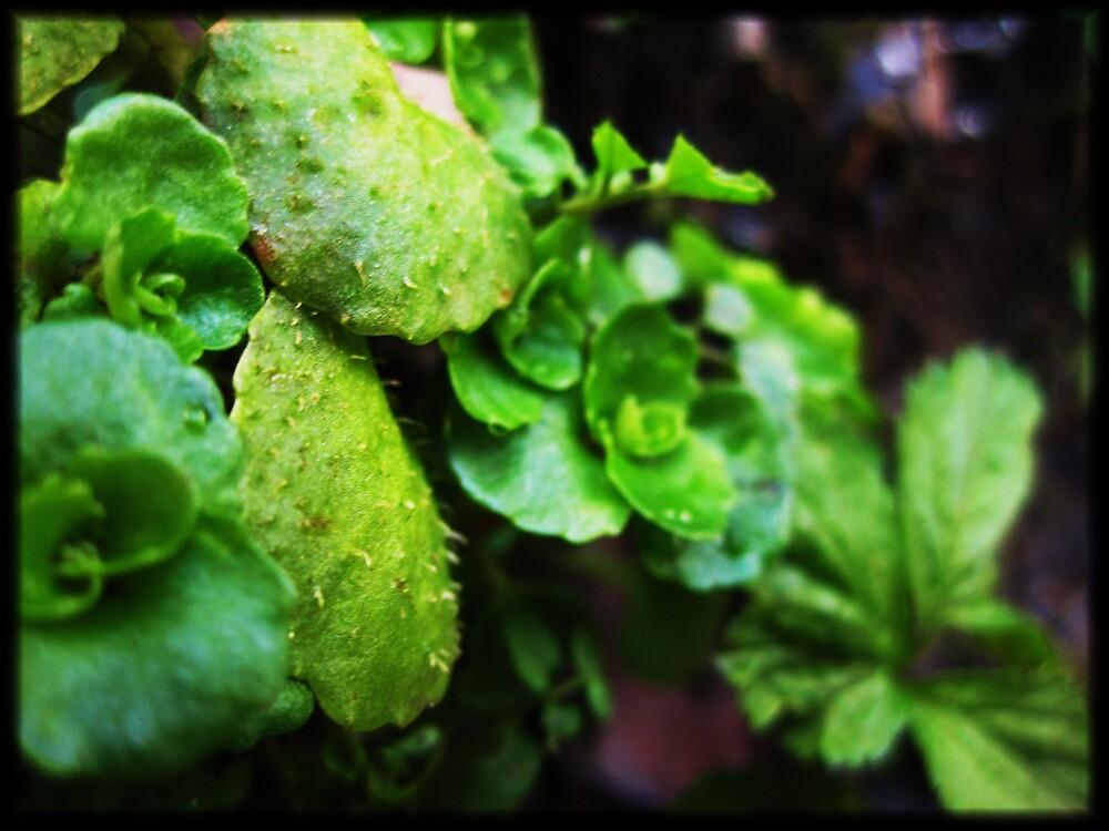 green by lisaellen