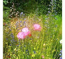 Wild Flowers for the people of Bridport to enjoy.. Photographic Print
