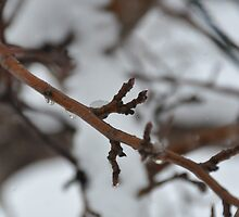 Spring tears by Chickapeek