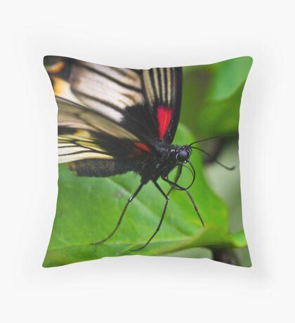 Butterfly Waiting Throw Pillow