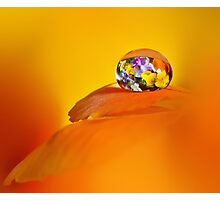 Pansy drop Photographic Print