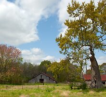 Spring Comes to the Farm by Bonnie T.  Barry
