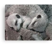 """A """"Meer"""" forty winks! Canvas Print"""
