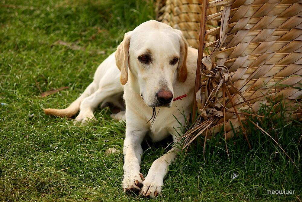 Guard Dog Waits  by meowiyer