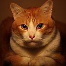 Well.... If It Isn't The Chesire Cat.   by meowiyer
