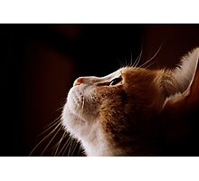 Kitty Heaven? Photographic Print