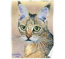 A Pensive Feline Poster