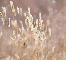 Grassland Whispers by Sarah-fiona Helme