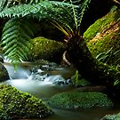 Stream on St Columba Falls walk by Ian Stevenson