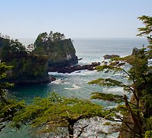 Cape Flattery Inlet, Washington by Stacey Lynn Payne