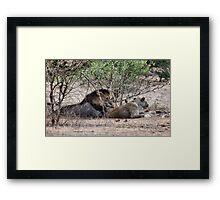 THE LIONS AT THE GIRAFFE KILL Framed Print