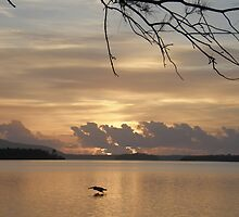 Early morning fisher by Anna D'Accione