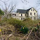 March daffodils and the Purgatory house by DariaGrippo