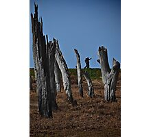 The Stumps Photographic Print