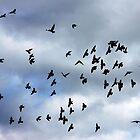 Wing formations in flight - flock of birds by Penny V-P