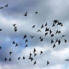 Wing formations in flight - flock of birds by Penni
