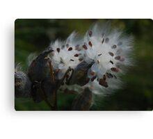 Milkweed Dreamy Canvas Print