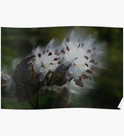 Milkweed Dreamy Poster