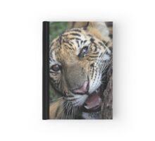 Curious Kitten Hardcover Journal