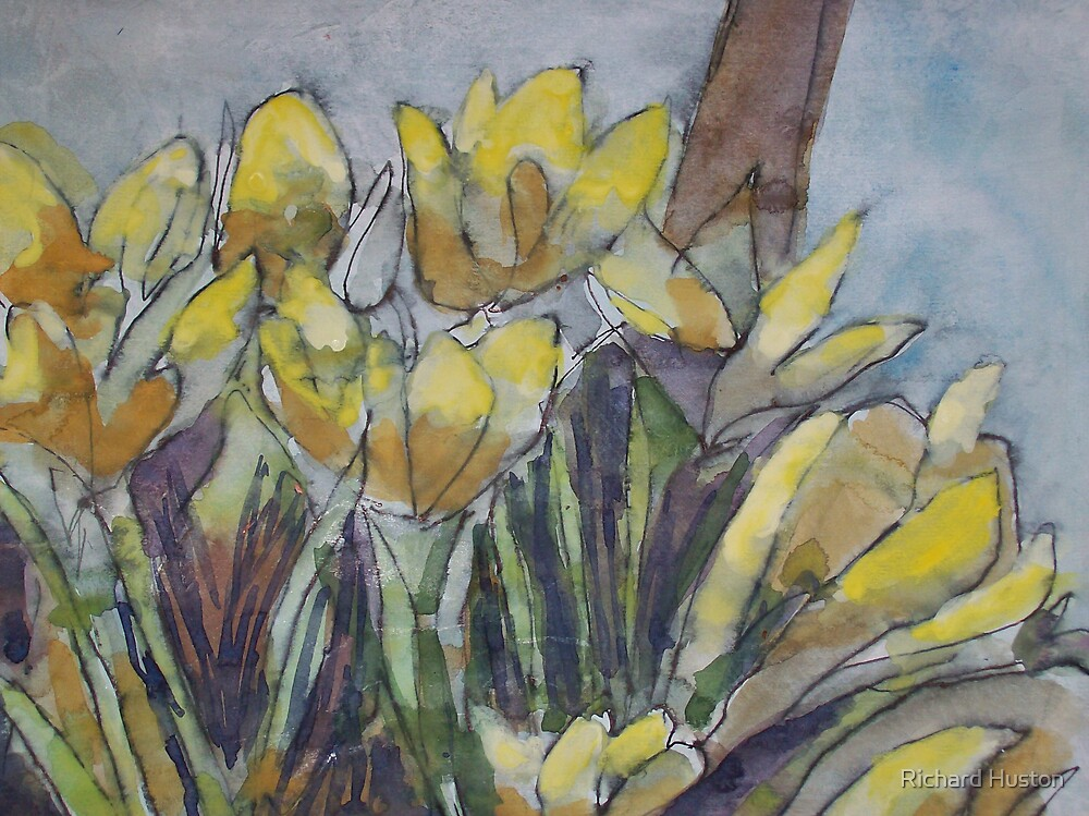 Daffodils in the morning sun by Richard Huston