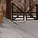 Gate in the Woods by Wendell Loggins