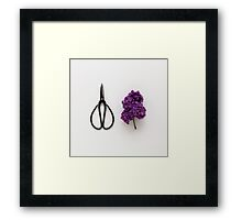Lilac and Scissors Framed Print