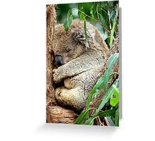 Sleeping Koala Greeting Card