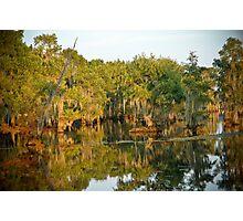 """Serenity In Cypress"" - Lake Bistineau Photographic Print"