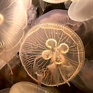 Jellyfish by Michael  Moss