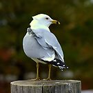 Ruffle my Feathers... another bad day..... by Larry Llewellyn