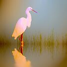 Egret in sunlight by shalisa
