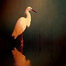 Midnight egret by shalisa