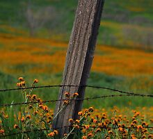 Old Fence Post and Spring Wildflowers by wademcmillan