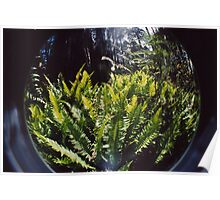ferns in the fishbowl Poster