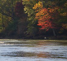FLY FISHING UNDER AUTUMN LEAVES by Wayne Hughes