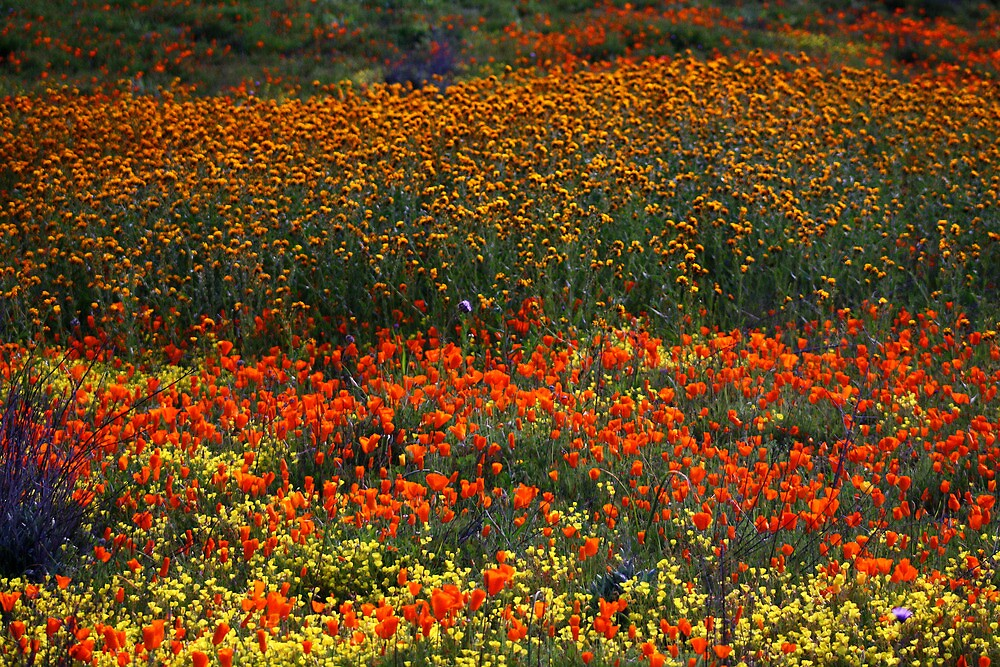 Wildflowers--Vivid Spring by wademcmillan