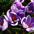 Spring Crocus by Jaymilina
