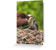 An Osprey Feeding a Chick Greeting Card