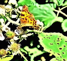 Comma on Brambles by DeneWest