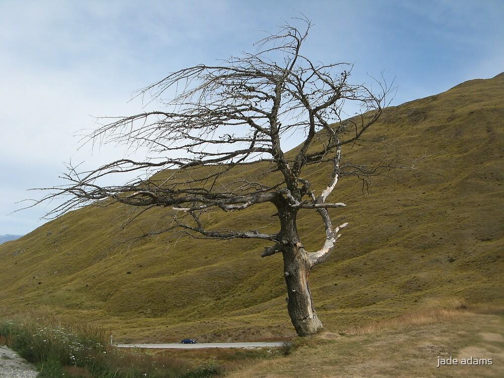 wind swept by jade adams