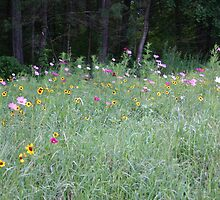 Wildflowers in the Berkshires by Bigart32