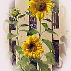 SUNFLOWER by fyre